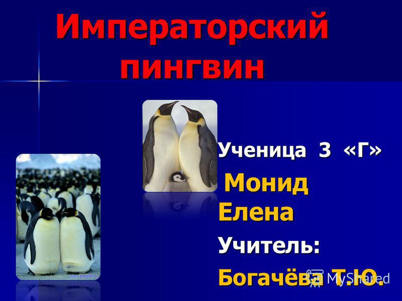 Императорский пингвин Ученица 3 «Г» Монид Елена Монид Елена Учитель: Богачёва Т.Ю.