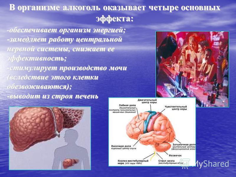 В организме алкоголь оказывает четыре основных эффекта: обеспечивает организм энергией; - обеспечивает организм энергией; -замедляет работу центральной нервной системы, снижает ее эффективность; -стимулирует производство мочи (вследствие этого клетки