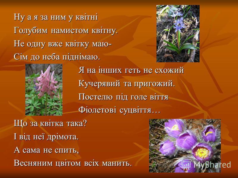Ну а я за ним у квітні Голубим намистом квітну. Не одну вже квітку маю- Сім до неба піднімаю. Я на інших геть не схожий Я на інших геть не схожий Кучерявий та пригожий. Кучерявий та пригожий. Постелю під голе віття Постелю під голе віття Фіолетові су