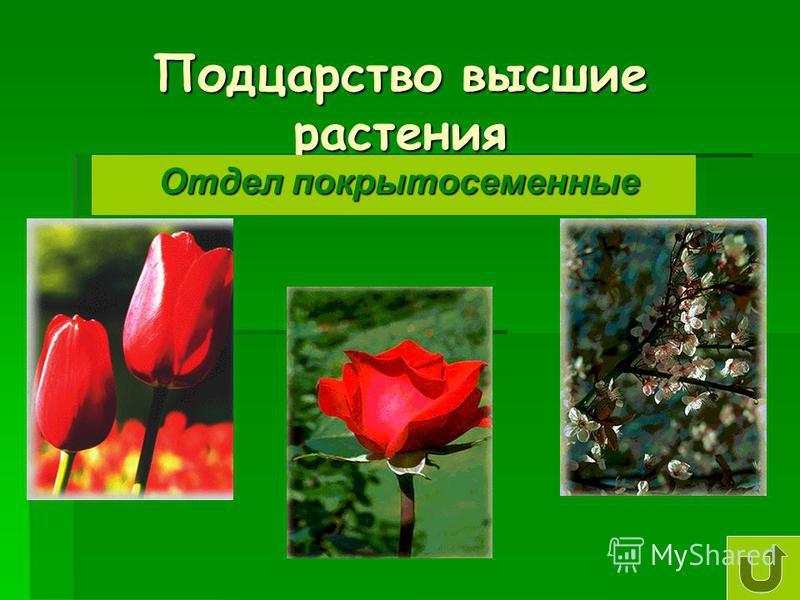 Подцарство высшие растения Отдел покрытосеменные Отдел покрытосеменные