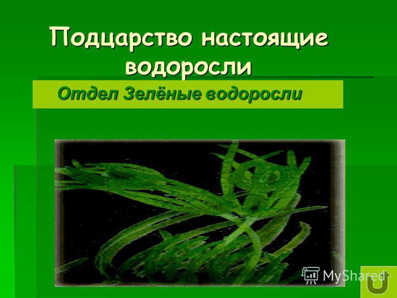 Подцарство настоящие водоросли Отдел Зелёные водоросли Отдел Зелёные водоросли