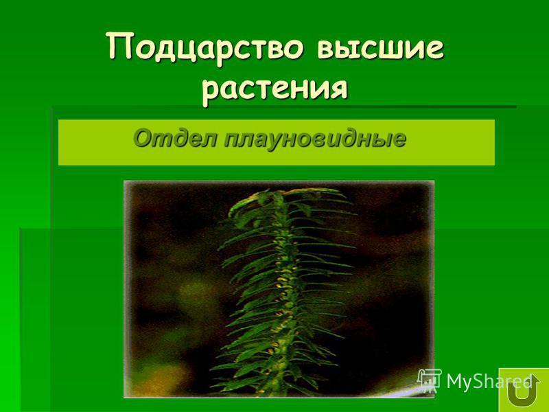 Подцарство высшие растения Отдел плауновидные Отдел плауновидные