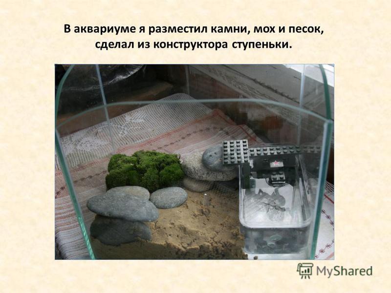 В аквариуме я разместил камни, мох и песок, сделал из конструктора ступеньки.
