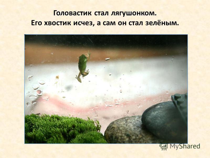 Головастик стал лягушонком. Его хвостик исчез, а сам он стал зелёным.