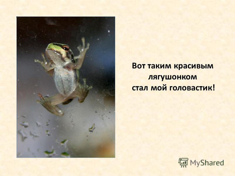 Вот таким красивым лягушонком стал мой головастик!