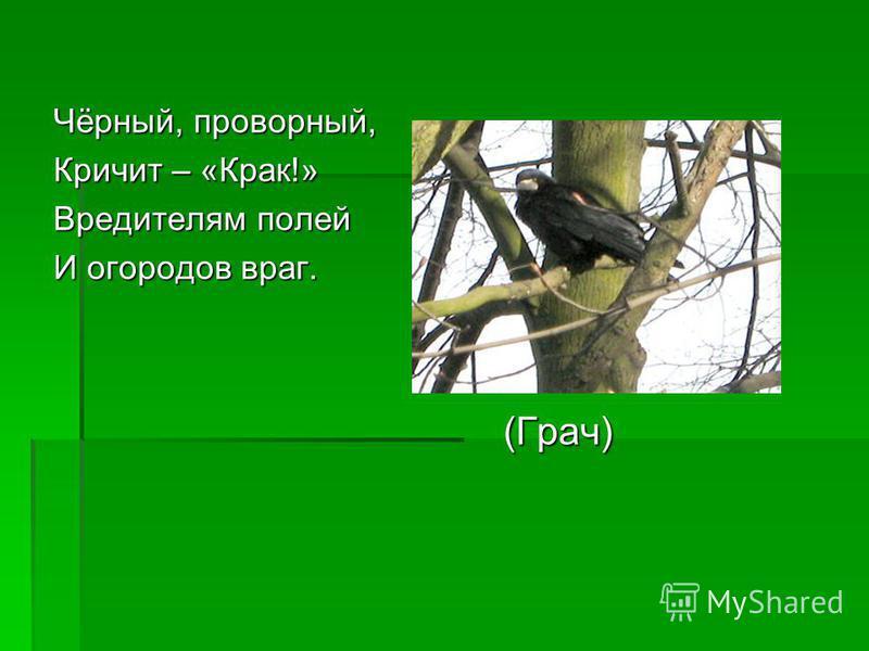 Чёрный, проворный, Кричит – «Крак!» Вредителям полей И огородов враг. (Грач) (Грач)