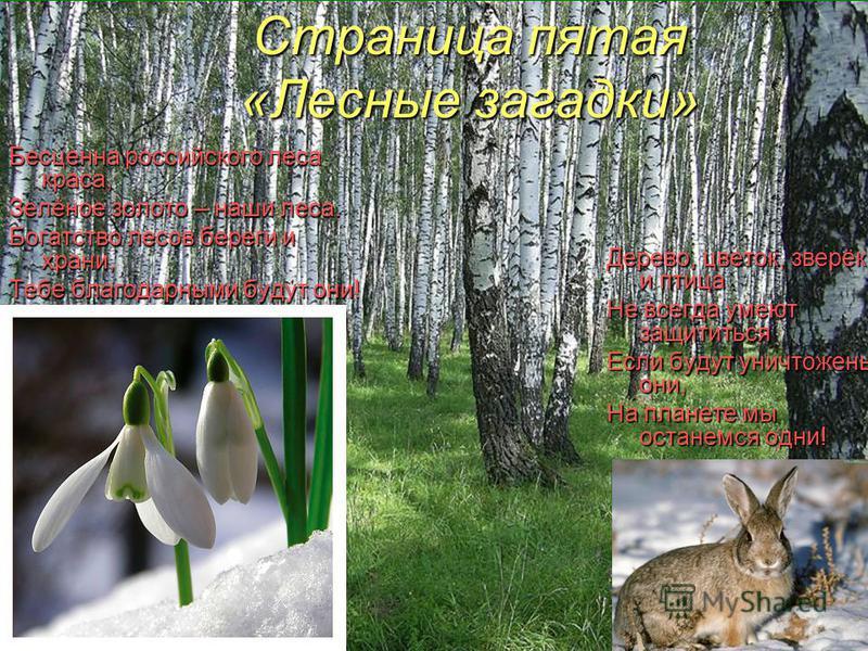 Страница пятая «Лесные загадки» Бесценна российского леса краса, Зелёное золото – наши леса. Богатство лесов береги и храни, Тебе благодарными будут они! Дерево, цветок, зверёк и птица Не всегда умеют защититься Если будут уничтожены они, На планете