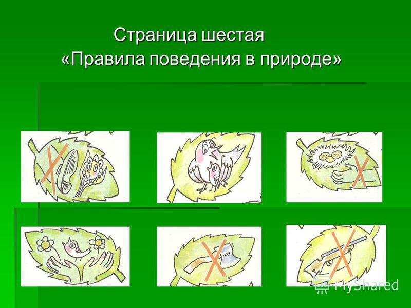 Страница шестая «Правила поведения в природе» Страница шестая «Правила поведения в природе»