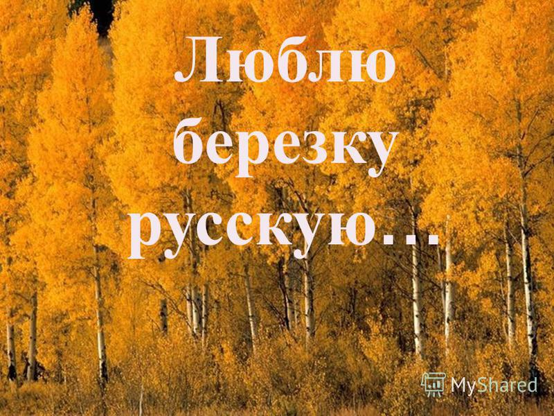 Люблю березку русскую …