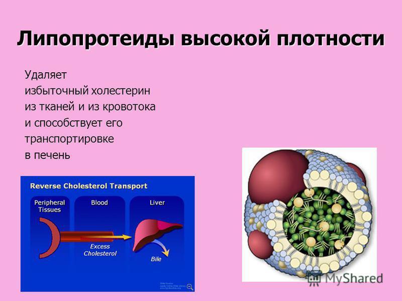 Липопротеиды высокой плотности Удаляет избыточный холестерин из тканей и из кровотока и способствует его транспортировке в печень