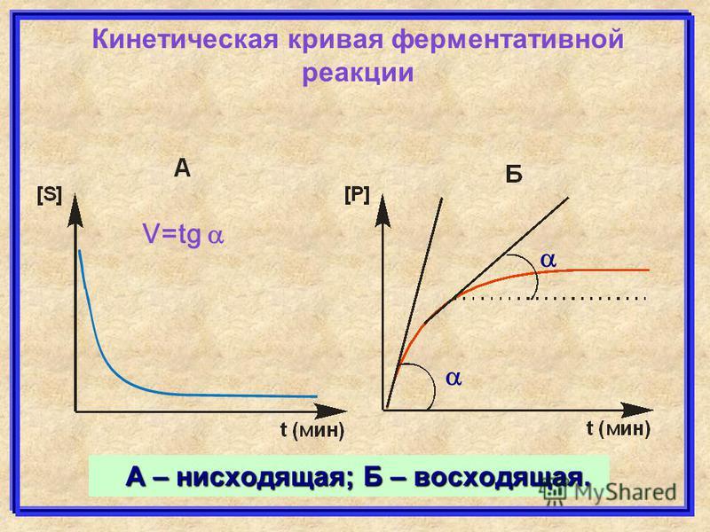 А – нисходящая; Б – восходящая. Кинетическая кривая ферментативной реакциии V=tg