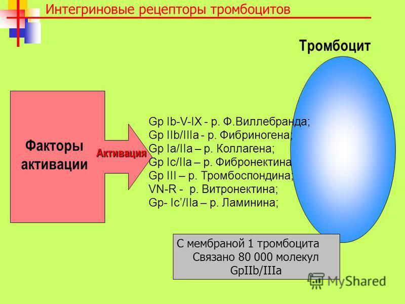 Интегриновые рецепторы тромбоцитов Тромбоцит Активация Факторы активации Gp Ib-V-IX - р. Ф.Виллебранда; Gp IIb/IIIa - р. Фибриногена; Gp Ia/IIa – р. Коллагена; Gp Ic/IIa – р. Фибронектина Gp III – р. Тромбоспондина; VN-R - р. Витронектина; Gp- Ic/IIa