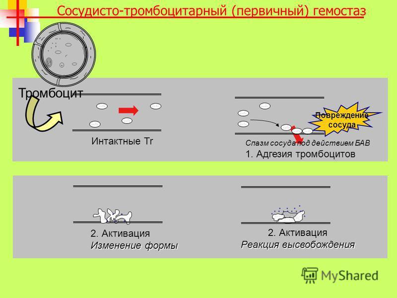 ... 2. Активация Изменение формы...................... 2. Активация Реакция высвобождения.......... Интактные Tr Тромбоцит.............. Спазм сосуда под действием БАВ 1. Адгезия тромбоцитов Повреждение сосуда Сосудисто-тромбоцитарный (первичный) гем