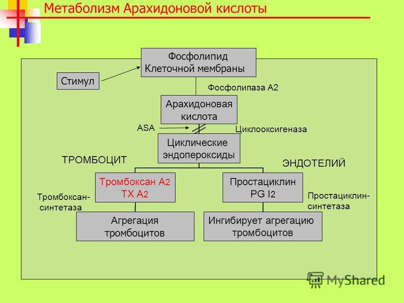 Метаболизм Арахидоновой кислоты ASA Циклооксигеназа ТРОМБОЦИТ ЭНДОТЕЛИЙ Тромбоксан- синтетаза Простациклин- синтетаза Фосфолипаза A2 Фосфолипид Клеточной мембраны Стимул