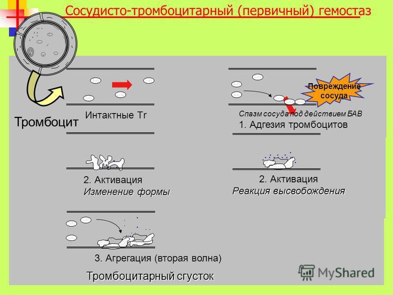 Тромбоцит Сосудисто-тромбоцитарный (первичный) гемостаз......................... 3. Агрегация (вторая волна) Тромбоцитарный сгусток... 2. Активация Изменение формы...................... 2. Активация Реакция высвобождения.......... Интактные Тr.......