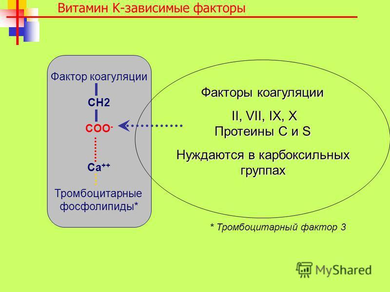 Витамин K-зависимые факторы Фактор коагуляции CH2 COO - Ca ++ Тромбоцитарные фосфолипиды* * Тромбоцитарный фактор 3 Факторы коагуляции II, VII, IX, X II, VII, IX, X Протеины C и S Нуждаются в карбоксильных группах