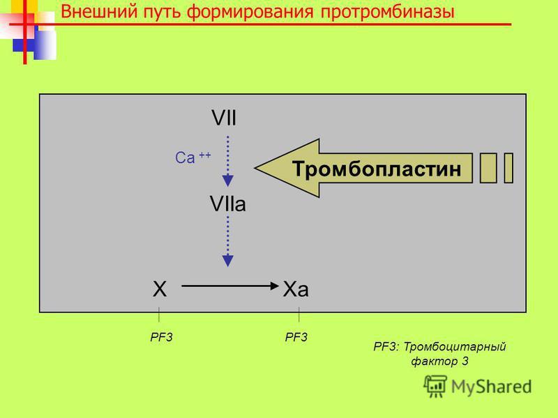 VII VIIa X Xa Внешний путь формирования протромбиназы Тромбопластин PF3 PF3 Ca ++ PF3: Тромбоцитарный фактор 3