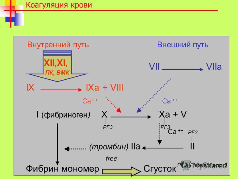 VII VIIa IX IXa + VIII I (фибриноген) X Xa + V (тромбин) IIa II Фибрин мономер Сгусток Коагуляция крови XII,XI, ПК, ВМК PF3 Ca ++ PF3: Platelet Factor3 Внутренний путь Внешний путь PF3 PF3 free