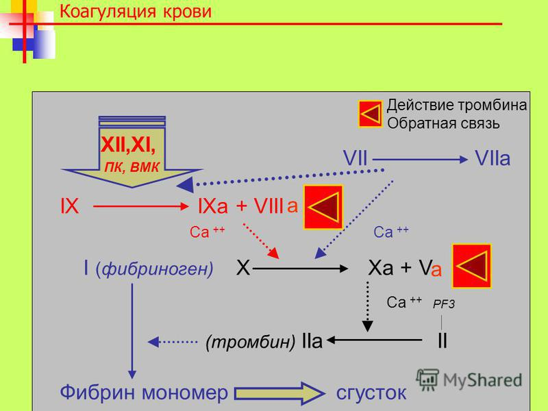 VII VIIa IX IXa + VIII I (фибриноген) X Xa + V (тромбин) IIa II Фибрин мономер сгусток Коагуляция крови XII,XI, ПК, ВМК PF3 Ca ++ Действие тромбина Обратная связь a