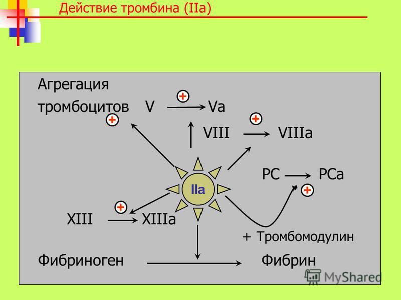 Агрегация тромбоцитов V Va VIII VIIIa PC PCa XIII XIIIa + Тромбомодулин Фибриноген Фибрин + + + + Действие тромбина (IIa) IIa +