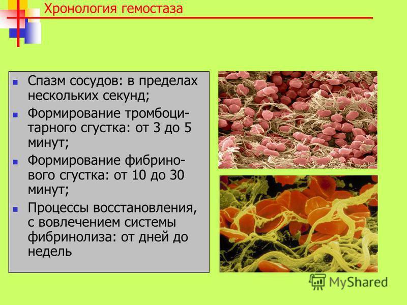 Хронология гемостаза Спазм сосудов: в пределах нескольких секунд; Формирование тромбоцитарного сгустка: от 3 до 5 минут; Формирование фибр и нового сгустка: от 10 до 30 минут; Процессы восстановления, с вовлечением системы фибринолиза: от дней до нед
