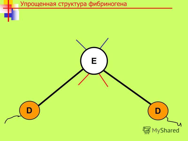 Упрощенная структура фибриногена D D E