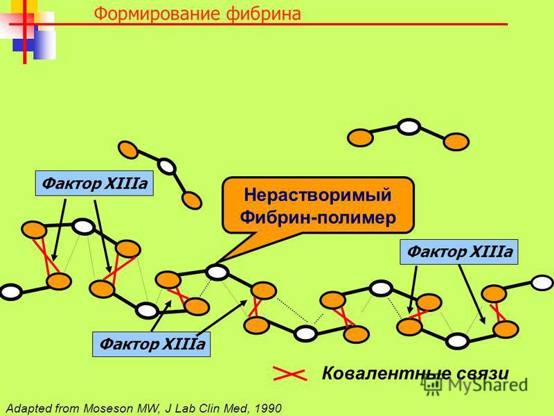 Ковалентные связи Нерастворимый Фибрин-полимер Adapted from Moseson MW, J Lab Clin Med, 1990 Фактор XIIIa Формирование фибрина