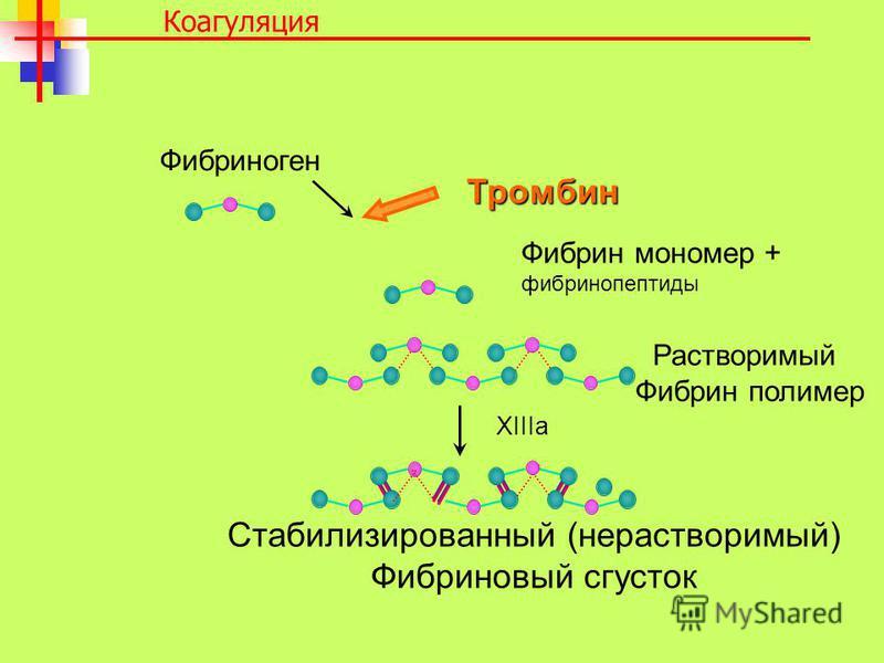 Стабилизированный (нерастворимый) Фибриновый сгусток Фибриноген Фибрин мономер + фибринопептиды Растворимый Фибрин полимер XIIIa Тромбин Коагуляция