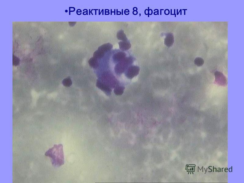 Реактивные 8, фагоцит