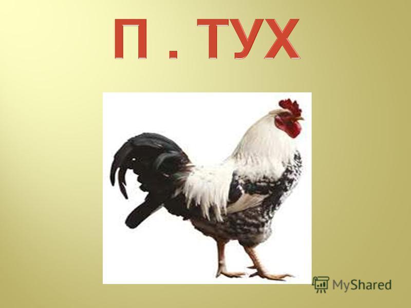 Курица >>