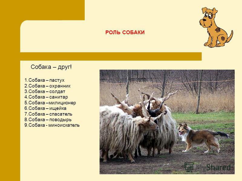 РОЛЬ СОБАКИ 1. Собака – пастух 2. Собака – охранник 3. Собака – солдат 4. Собака – санитар 5. Собака –милиционер 6. Собака – ищейка 7. Собака – спасатель 8. Собака – поводырь 9. Собака - миноискатель Собака – друг!