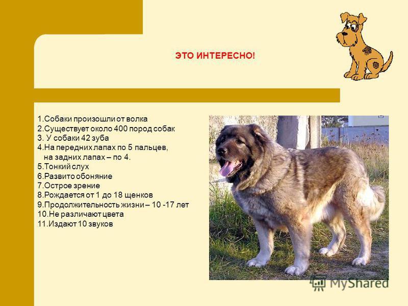 1. Собаки произошли от волка 2. Существует около 400 пород собак 3. У собаки 42 зуба 4. На передних лапах по 5 пальцев, на задних лапах – по 4. 5. Тонкий слух 6. Развито обоняние 7. Острое зрение 8. Рождается от 1 до 18 щенков 9. Продолжительность жи