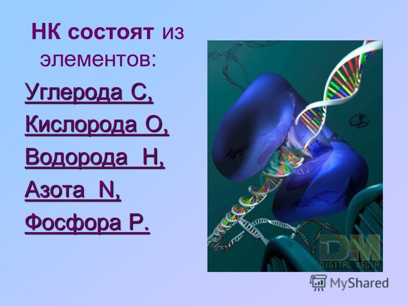 Нуклеиновые кислоты –- это биополимеры, макромолекулы которых состоят из многократно повторяющихся звеньев - нуклеотидов.