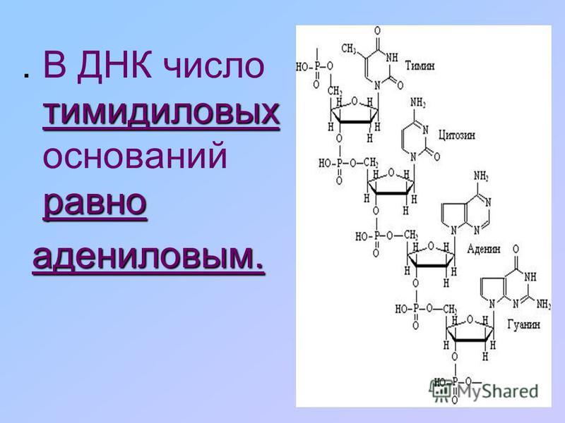 Комплементарность – это взаимное дополнение азотистых оснований в молекуле ДНК.