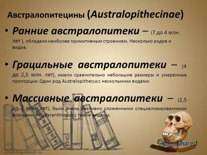 Австралопитецины (Australopithecinae) Ранние австралопитеки – ( 7 до 4 млн. лет ), обладали наиболее примитивным строением. Несколько родов и видов. Грацильные австралопитеки – ( 4 до 2,5 млн. лет ), имели сравнительно небольшие размеры и умеренные п