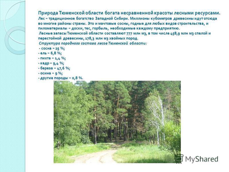 Природа Тюменской области богата несравненной красоты лесными ресурсами. Лес традиционное богатство Западной Сибири. Миллионы кубометров древесины идут отсюда во многие районы страны. Это и мачтовые сосны, годные для любых видов строительства, и пило