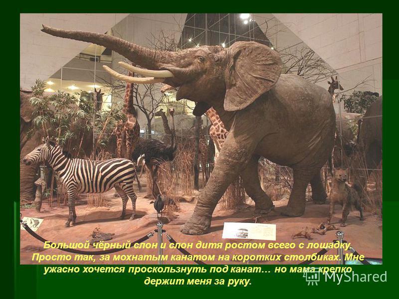 Большой чёрный слон и слон дитя ростом всего с лошадку. Просто так, за мохнатым канатом на коротких столбиках. Мне ужасно хочется проскользнуть под канат… но мама крепко держит меня за руку.