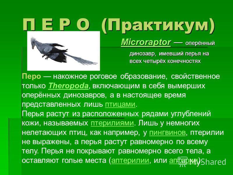 П Е Р О (Практикум) MicroraptorMicroraptor оперённый динозавр, имевший перья на всех четырёх конечностях Microraptor Перо накожное роговое образование, свойственное только Theropoda, включающим в себя вымерших оперённых динозавров, а в настоящее врем
