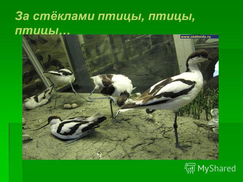 За стёклами птицы, птицы, птицы…
