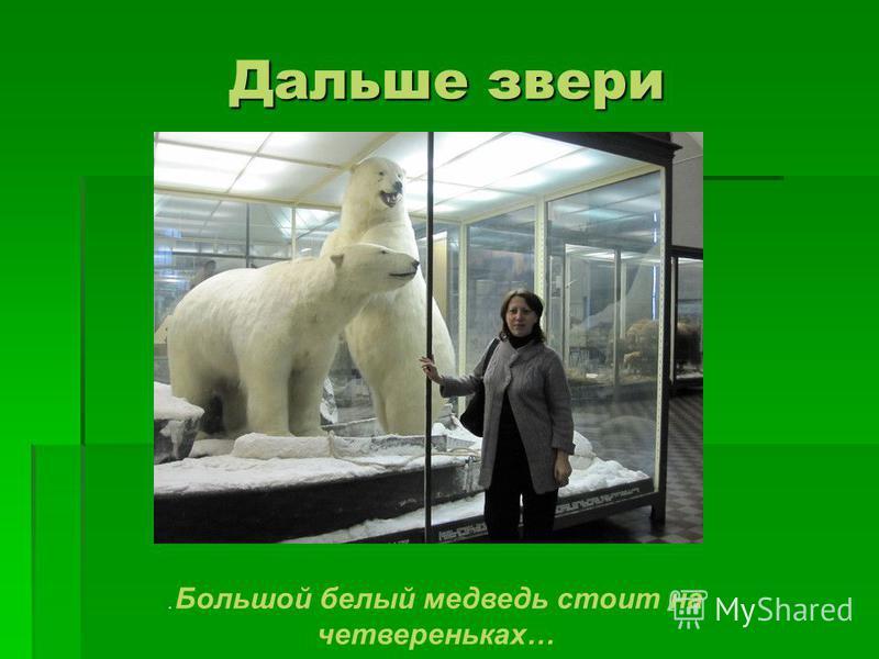 Дальше звери. Большой белый медведь стоит на четвереньках…