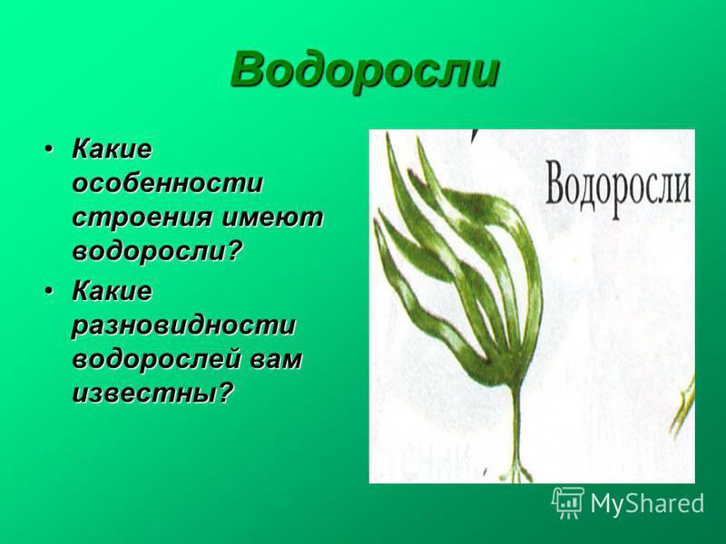 Водоросли Какие особенности строения имеют водоросли?Какие особенности строения имеют водоросли? Какие разновидности водорослей вам известны?Какие разновидности водорослей вам известны?
