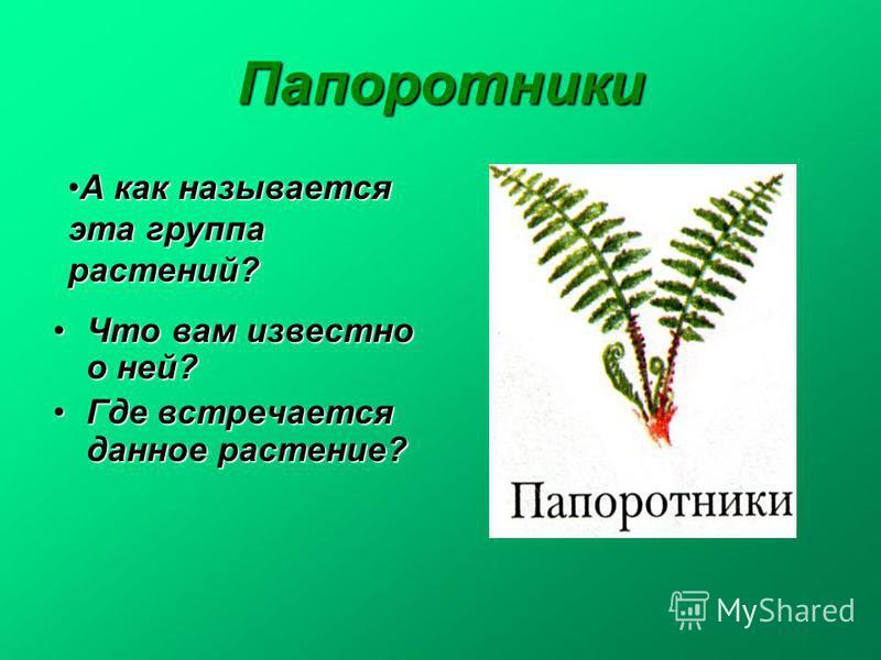 Папоротники Что вам известно о ней?Что вам известно о ней? Где встречается данное растение?Где встречается данное растение? А как называется эта группа растений?А как называется эта группа растений?