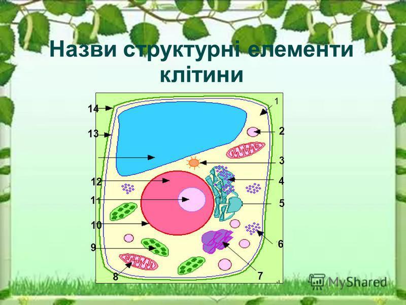 Назви структурні елементи клітини 1 2 3 4 5 6 7 8 9 10 1 12 13 14
