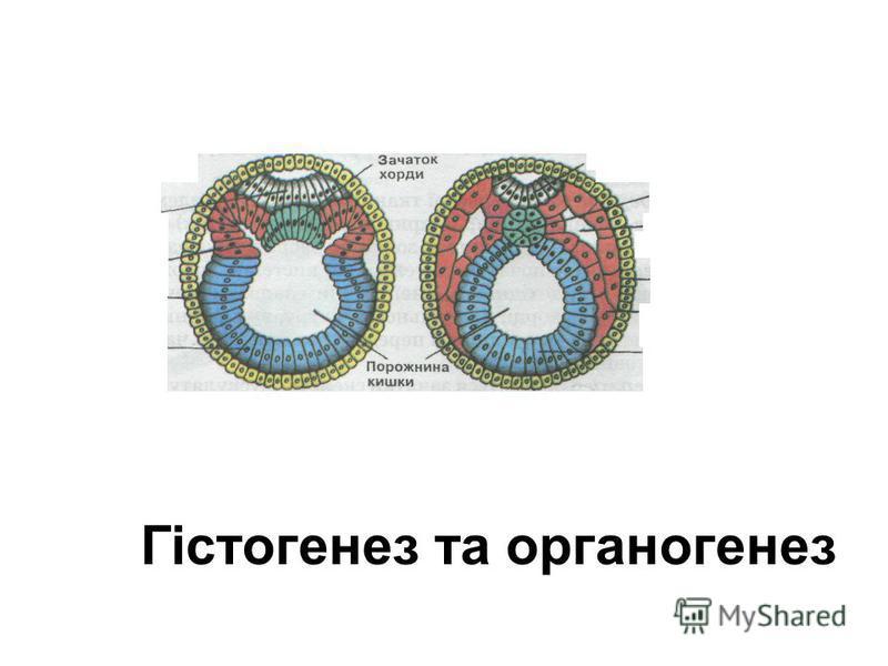 Гістогенез та органогенез