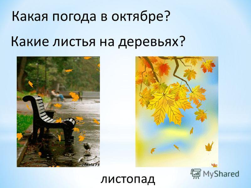 Какая погода в октябре? Какие листья на деревьях? листопад