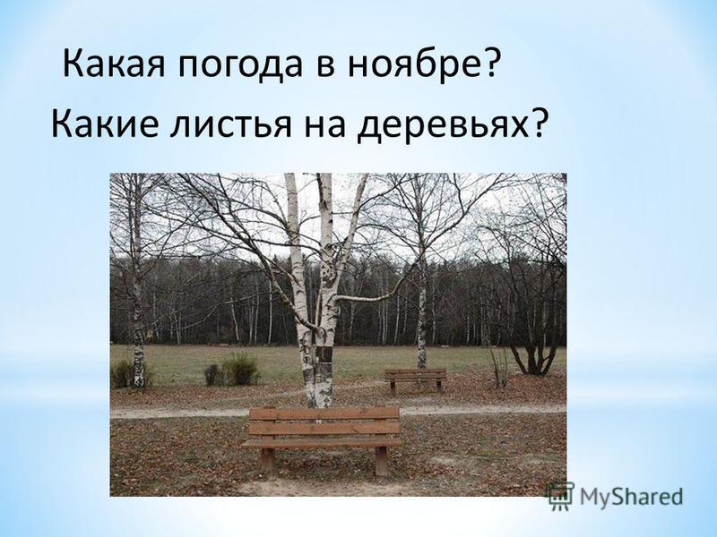 Какая погода в ноябре? Какие листья на деревьях?