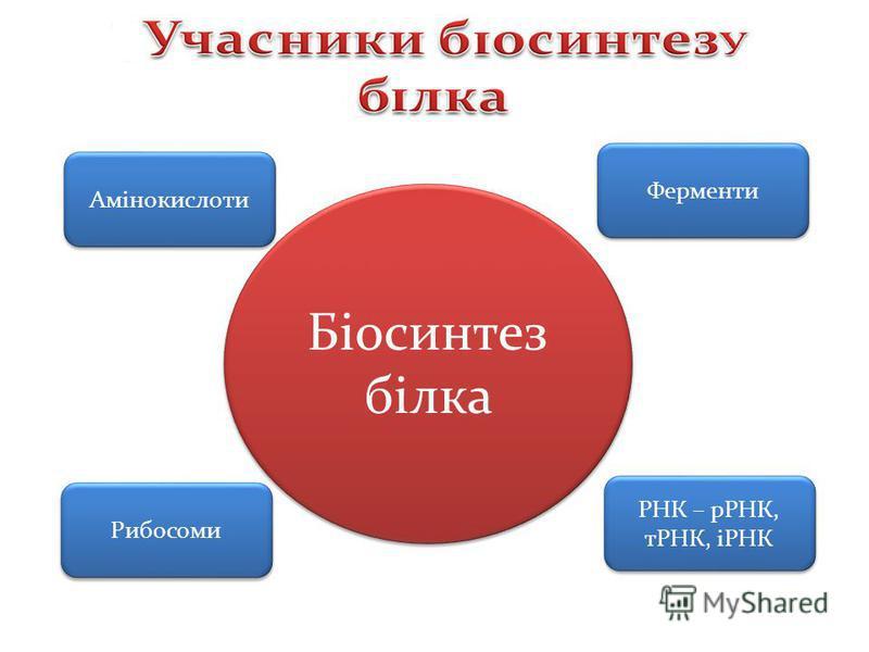 Амінокислоти Ферменти Рибосоми РНК – рРНК, тРНК, іРНК Біосинтез білка Біосинтез білка