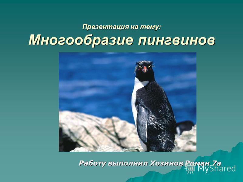 Презентация на тему: Многообразие пингвинов Работу выполнил Хозинов Роман 7 а