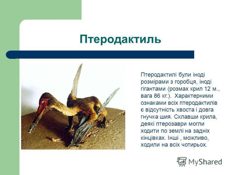 Птеродактиль Птеродактилі були іноді розмірами з горобця, іноді гігантами (розмах крил 12 м., вага 86 кг.). Характерними ознаками всіх птеродактилів є відсутність хвоста і довга гнучка шия. Склавши крила, деякі птерозаври могли ходити по землі на зад