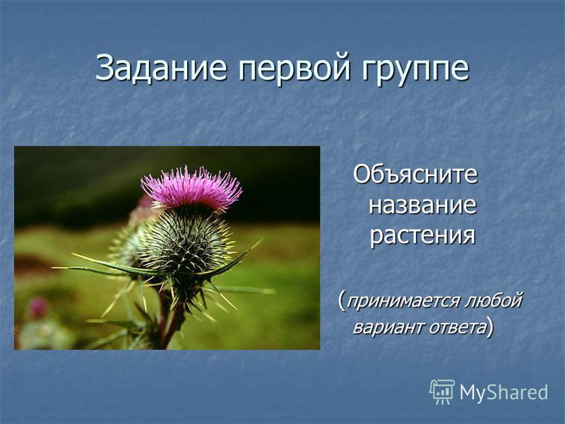 Задание первой группе Объясните название растения Объясните название растения ( принимается любой вариант ответа ) ( принимается любой вариант ответа )